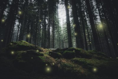 magical lights sparkling in mysterious forest at night
